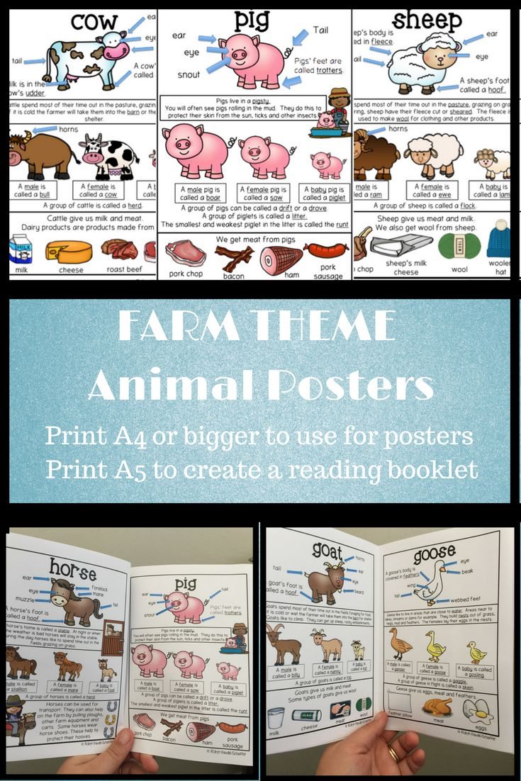 Farm Animal themed posters. Print A4 or bigger to use as part of a display in the classroom.  Print smaller A5 and creating a reading booklet. Vocab covered in these posters includes basic body parts of each animal; male, female and baby names; where they live; what products we get from them and collective nouns.   Posters included :Pig, horse, goose, chicken, sheep, cow, and goat. #farmtheme #farmanimals #posters #tpt