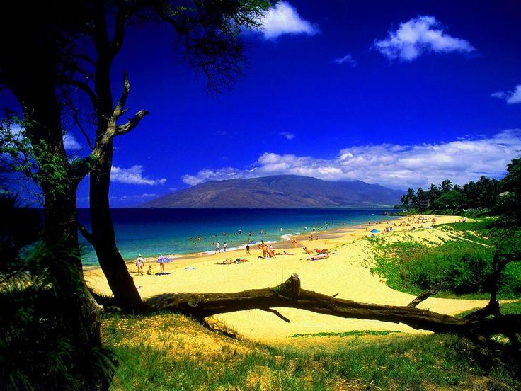 Free Summer Desktop Backgrounds   tianyihengfeng Free Download ...