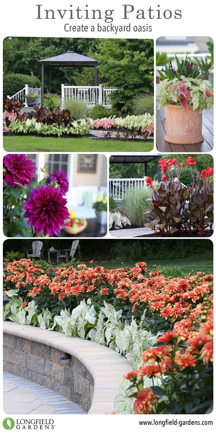 To Keep The Color Going Strong, Your Garden Needs To Include Plants That  Are At. Spring TimeGardening TipsBeautiful ...