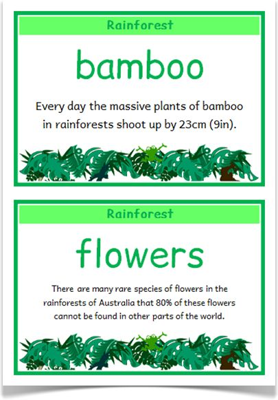 Rainforest Fact Cards - Treetop Displays - A set of 18 A5 fact cards that give fun, interesting and key facts about rainforest habitats. This set is great for activities, discussions, introducing a new topic and for display boards! Visit our website for more information and for other printable classroom resources by clicking on the provided links. Designed by teachers for Early Years (EYFS), Key Stage 1 (KS1) and Key Stage 2 (KS2).
