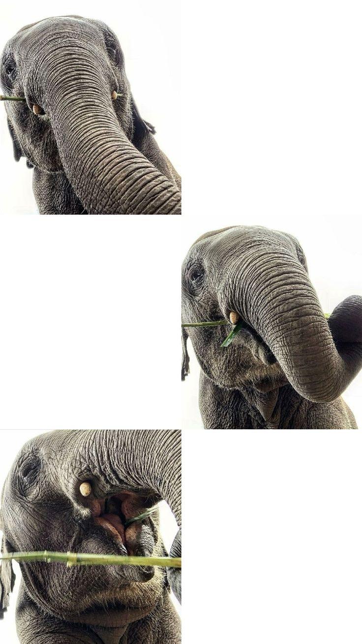 elephant wallpaper white minimalist aesthetic elephant