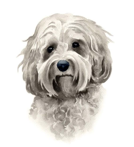 COCKAPOO Dog Art Print Signed by Artist DJ Rogers by k9artgallery, $12.50