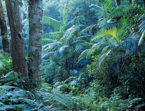 Facts About Brazil Rainforest  Brazil Rainforest, Brazil -6376