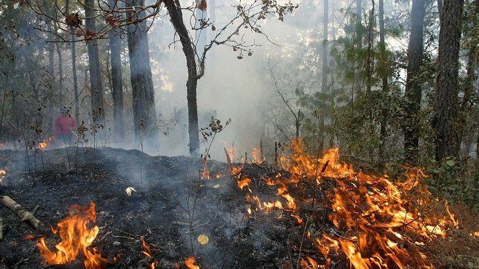 Incendios forestales afectarán gravemente a México este 2016 - http://verdenoticias.org/index.php/blog-noticias-medio-ambiente/121-incendios-forestales-afectaran-gravemente-a-mexico-este-2016