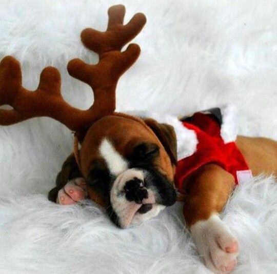 cutest reindeer i ever did see.
