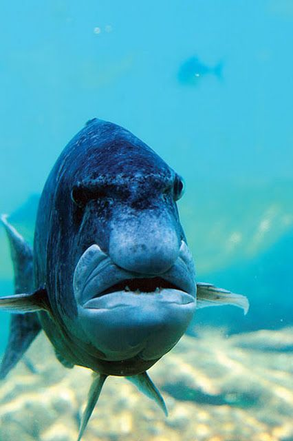 When a Fish Looks Like Some Guy !