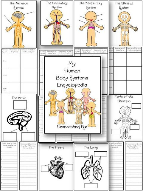 Human Body Systems-Ready to Teach! | Life, Love, Literacy                                                                                                                                                                                 More
