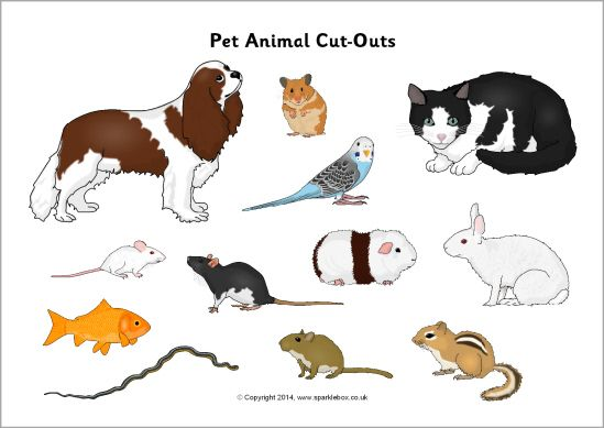 Pet animal cut-outs- SparkleBox-Sort into different habitats