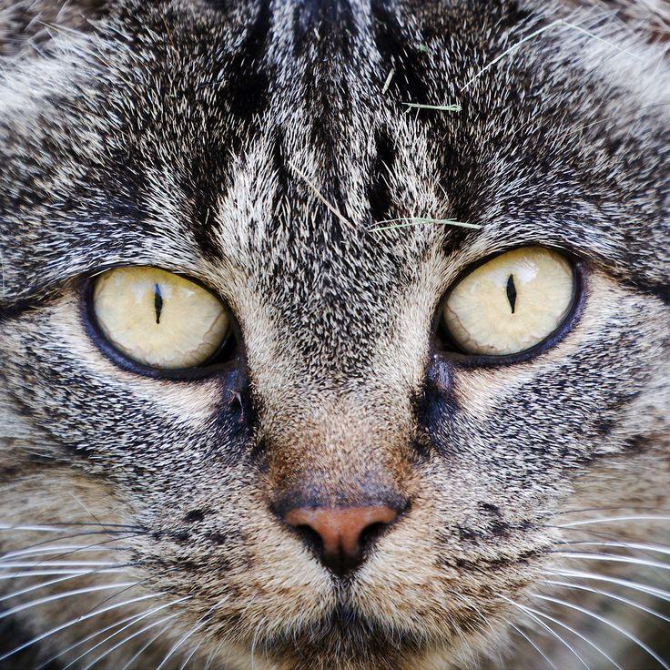 Katteøjne - Cat-eyes