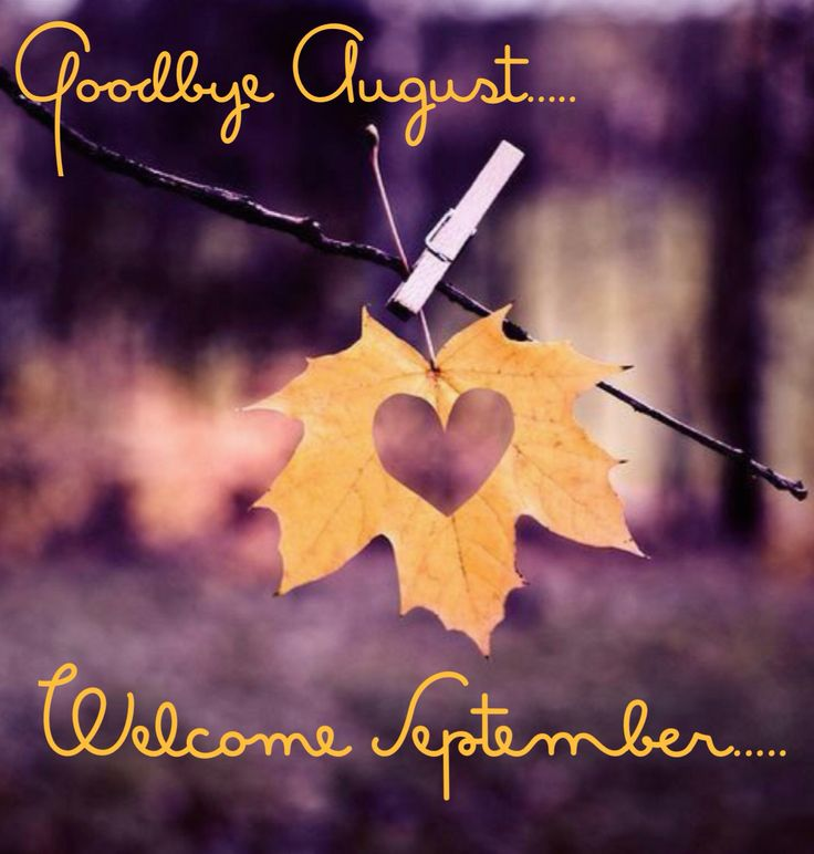 Out with August, heading into Fall, change is in the air. The light gives us different shadows, the mornings get crisper, the smell of Autumn slowly comes in. Once again Mother Nature changes her canvas and blesses us with a new palette full of beauty. Hello September, we welcome the abundance of Fall.
