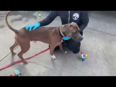 Roscoe 71843 I The Sweetest Boy Youtube Roscoe Foster Animals