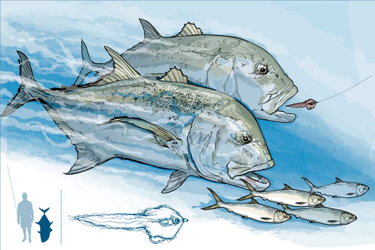 The Giant Trevally: Making Your Cast Count