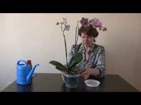 ▶ Подкормка орхидей - YouTube