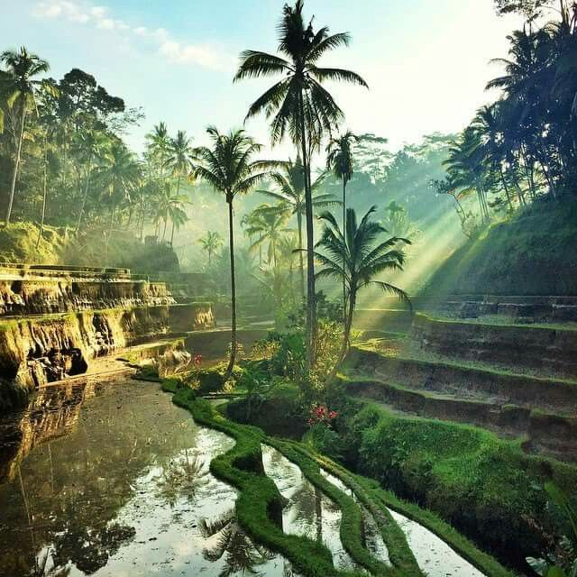 Sunrise at Tegallagang rice terrace in Bali