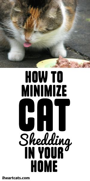 How To Minimize Cat Shredding In Your Home