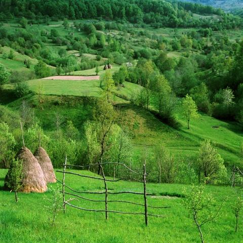 Romanian countryside..green grass:)