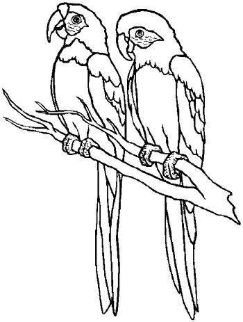 Image Result For Parrot Snapshot Pencil Sketches Pencil Sketch