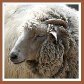 Chinese Zodiac | Year of the Sheep 1943, 1955, 1967, 1979, 1991, 2003, 2015