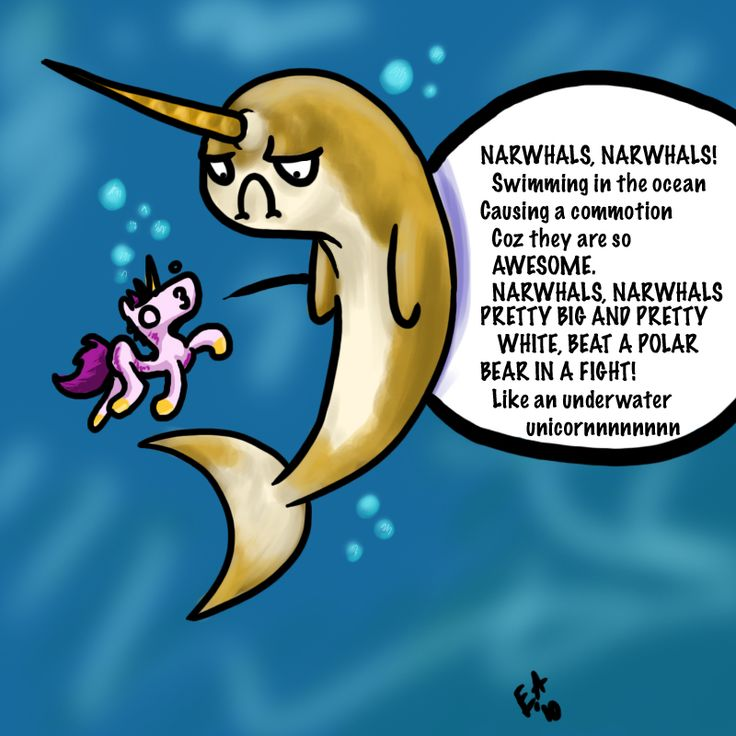The narwhal song don 39 t listen to this song unless you want it in your head for the rest of for Swimming swimming in the swimming pool song lyrics