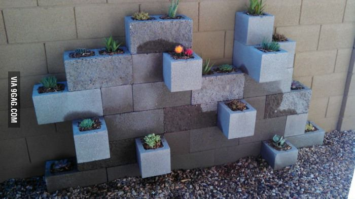 Cacti Garden Complete. @Ashley Weddle and @Leigh Ann Chmielewski umm guys this looks like a way cool concept!