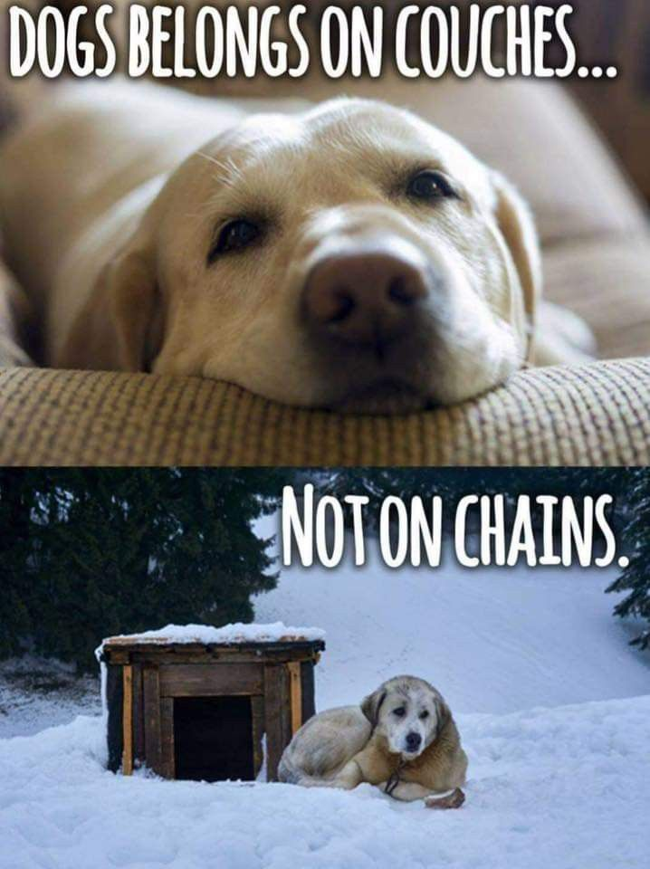 Pin By Angela Martinez On Animal Advocacy Dogs I Love Dogs Funny Animals