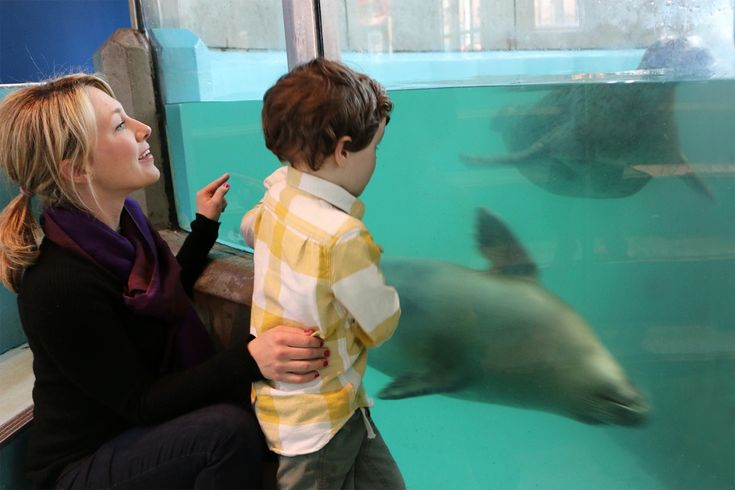 New Mommy and Me Series at the Maritime Aquarium Norwalk