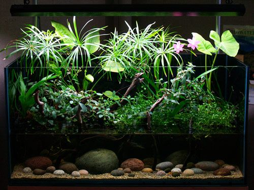 An awesome water garden terrarium aquascape pinterest for Aquarium ouvert