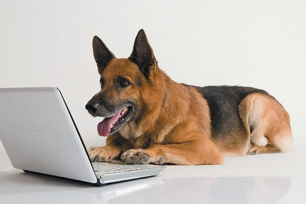 Pet Insurance for Dogs Should You Have It?