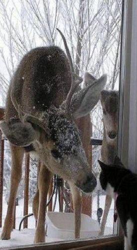 Just let us in... it's cold out here!