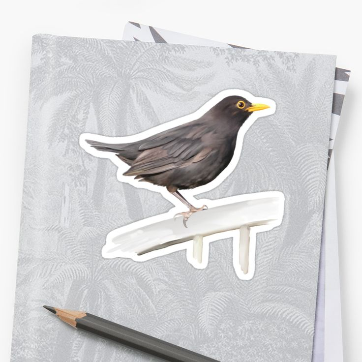 The female Blackbird, (Turdus merula), is in fact, brown. / Hand painted original watercolor. • Also buy this artwork on stickers, apparel, phone cases, and more.
