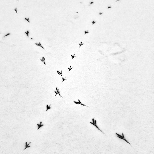 .@Tonick | Pretty lost in the white. #snow