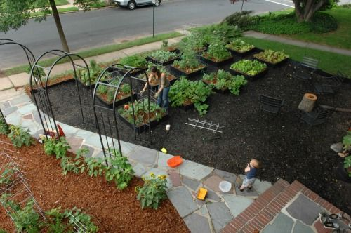 front yard edible gardens | Pictures of Front Yard Vegetable Gardens | One Hundred Dollars a Month