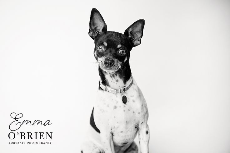 Dogs and horses photographed on location by specialist pet portrait photographer Emma O'Brien. Emma is available for commissions throughout South Africa.
