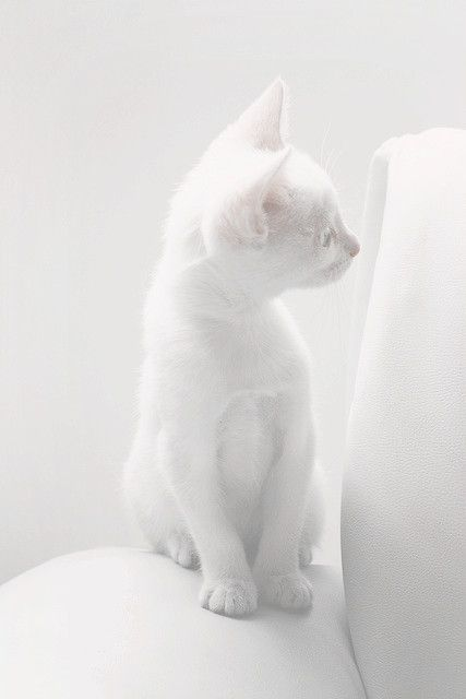 I see white...