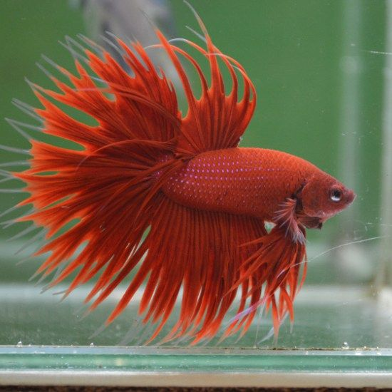 481 best pretty fish images on pinterest beautiful fish for Wholesale tropical fish