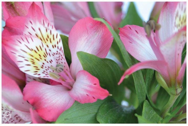 Atromélia - flor do dia | Dicas e inspirações para receber com charme e fazer um chá da tarde lindo entre amigas