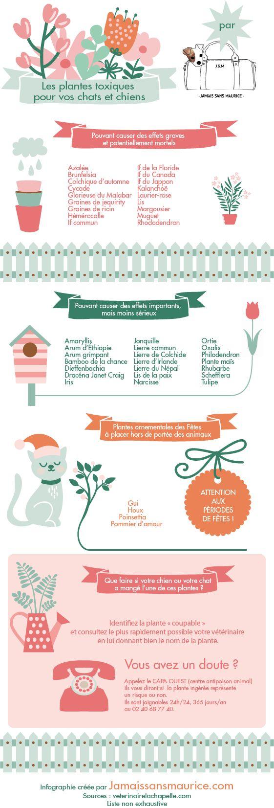 Les plantes toxiques pour chats et chiens - superbe infographie réalisée par nos ch'amis de chez Jamais sans Maurice