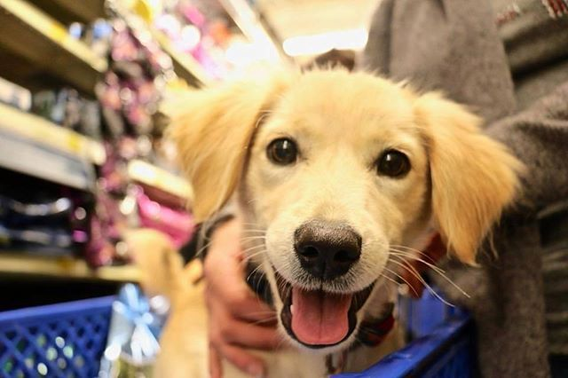 Join us at the Beaches PetSmart for adoptions this