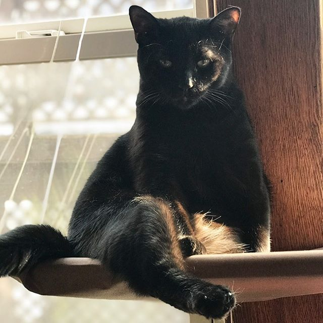 Happy National Black Cat Day To My Love I Love You So Much Aslan Blackcats Blackcatclub Happy National Black Black Cat Day National Black Cat Day Cat Day