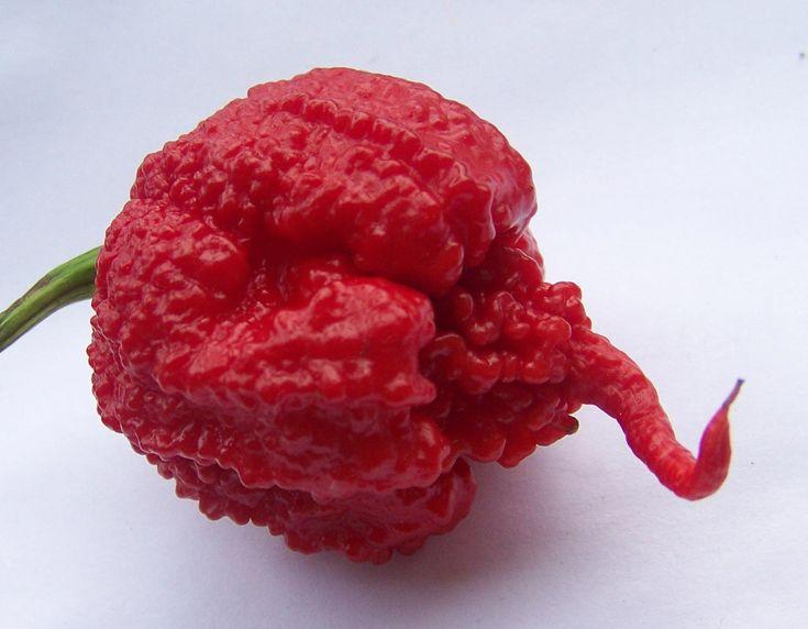 Carolina Reaper Pepper - Capsicum Chinense - The worlds HOTTEST Chilli Pepper - Seeds