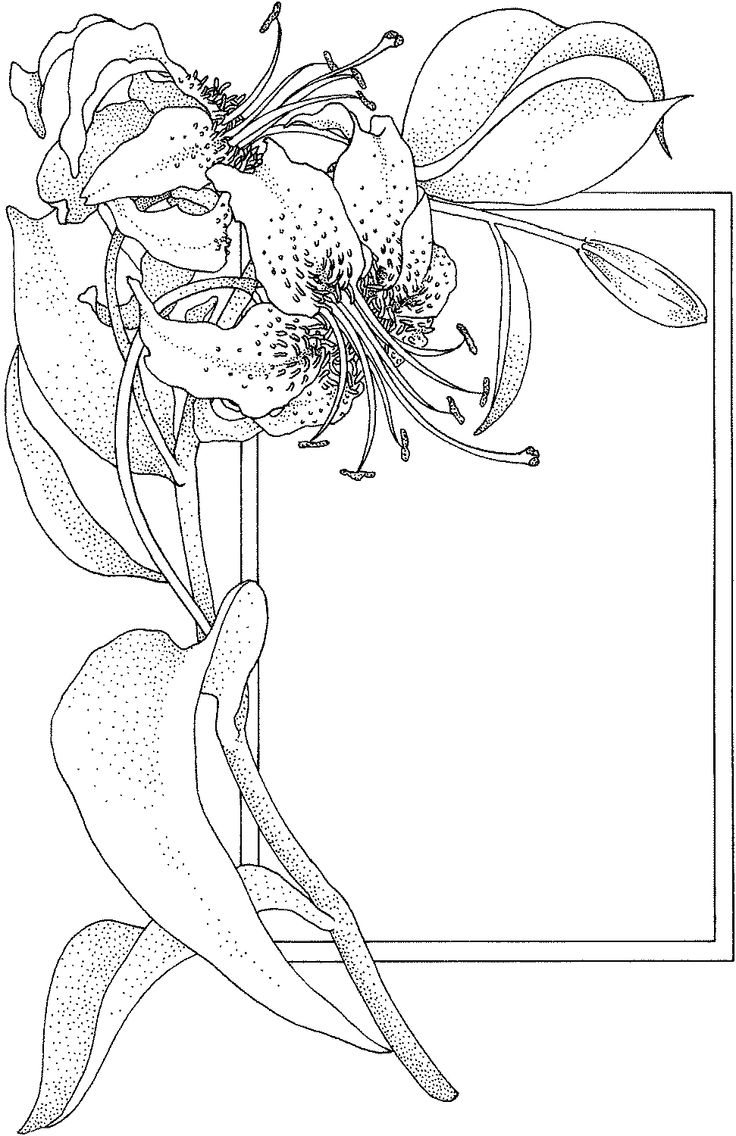 printable coloring pages lily - photo#24