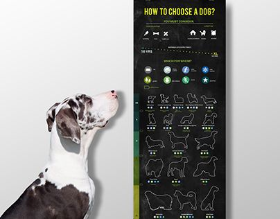 How to choose a dog -infographic