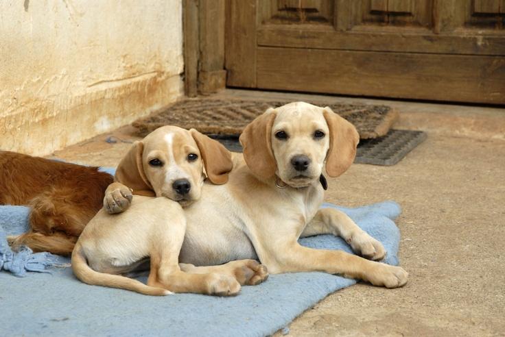 Twee gezonde puppy's wachten op een nieuwe eigenaar in een asiel op het Griekse eiland Kreta.