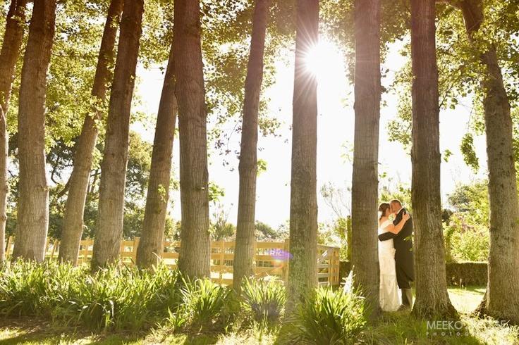 Stunning light. Gorgeous trees. #summerwedding