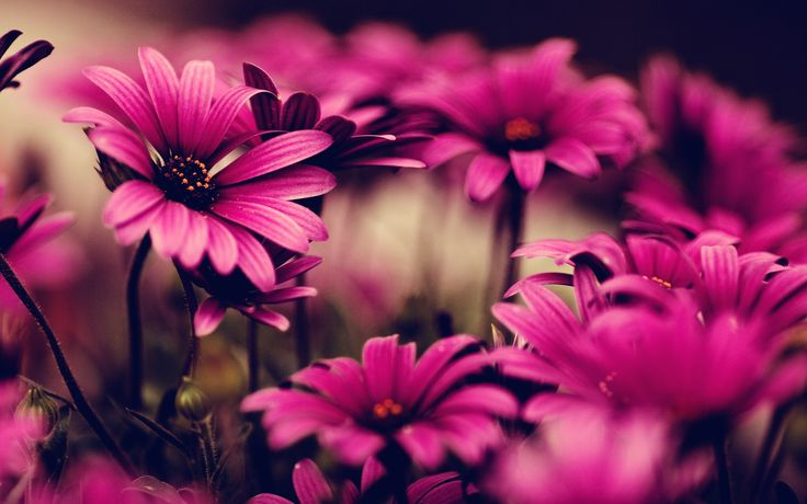 花柄の壁紙tumblr6