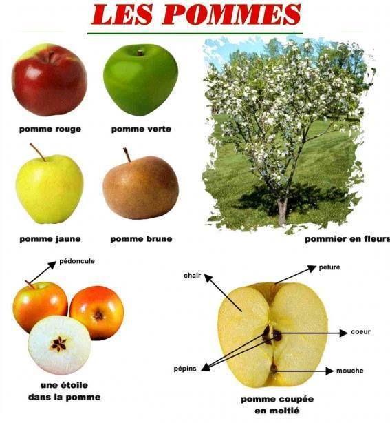les pommes …