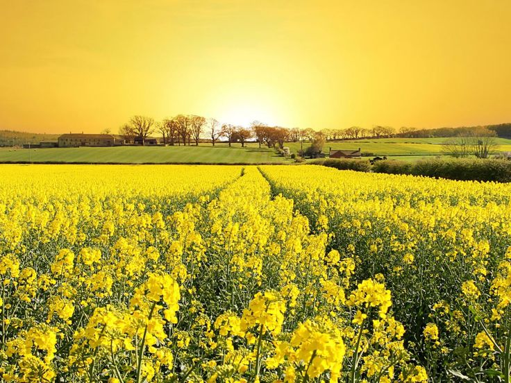 711 best Mellow yellow images on Pinterest | Yellow, Color yellow ...