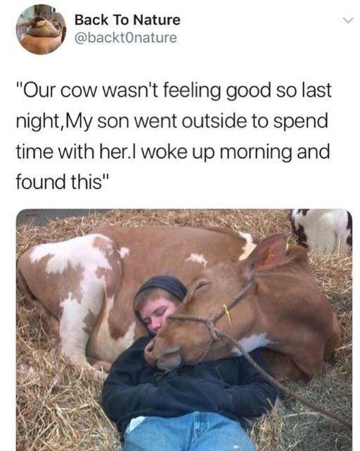 Tier Memes Memes, die so komisch komisch sind (20+ Bilder