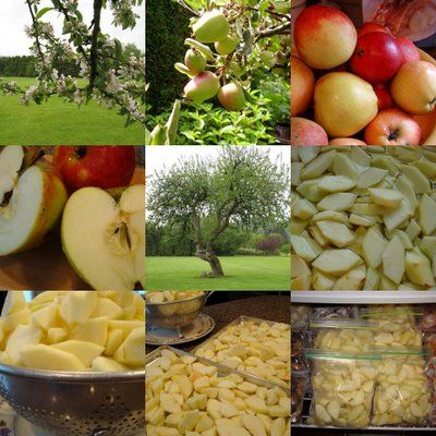 Mennonite Girls Can Cook: Freezing Apples