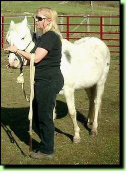 """Horse Whispering """"Tricks of the Trade"""" Tips to Help  Relax a Horse, Build Trust and Bond Them To Us"""